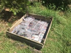 Potatoes garden bed lined with newspaper