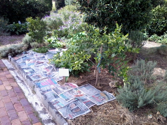 laydown newspaper to cover the garden