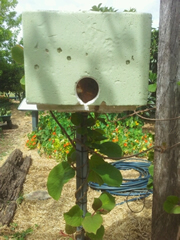 Native Stingless Beehive