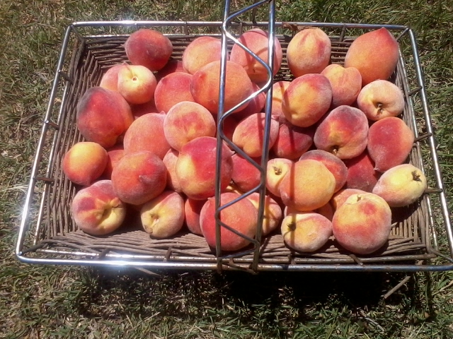Yummy Peaches