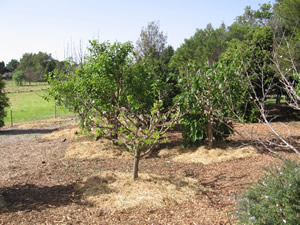 Orchard in Zone 2